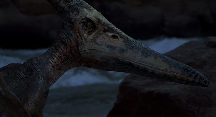 pteranodon03 Pteranodon